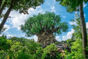 DSC00396-tree of life